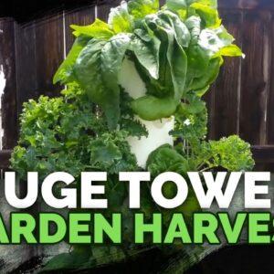 HUGE Tower Garden Harvest