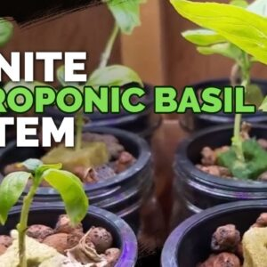 Hydroponic Basil: Grow Basil Forever From 1 Plant