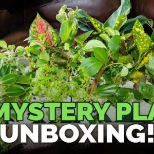 I Bought 19 Mystery Houseplants for $77.91! 🌱🤯
