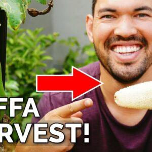 I Grew My Own Luffa Sponge | Luffa Gourd Harvest & Growing Tips