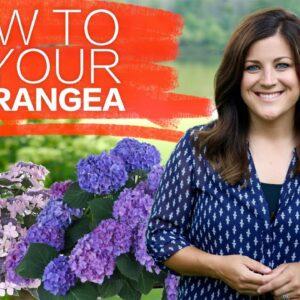Identifying Your Hydrangea