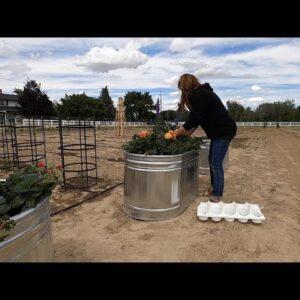 Planting Strawberries for Benjamin in Stock Tanks! 🍓🌿// Garden Answer
