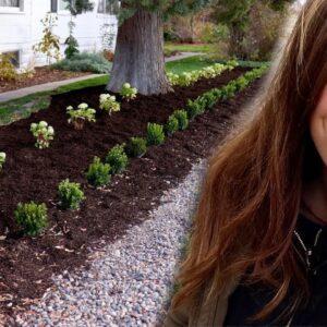 I'm Still Planting Hydrangeas in November 🌿// Garden Answer