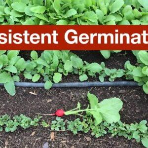 Inconsistent Germination