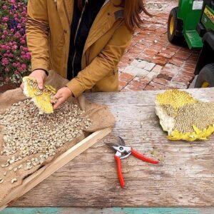 Harvesting Sunflower Seeds! 🌻🙌🧡 // Garden Answer