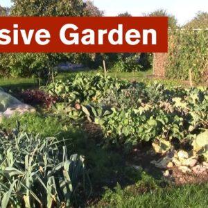 Intensive Garden Introduction