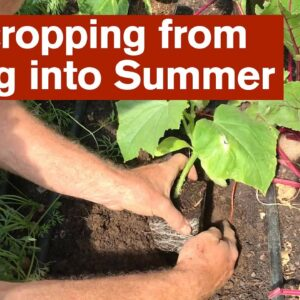 Intercropping from Spring into Summer
