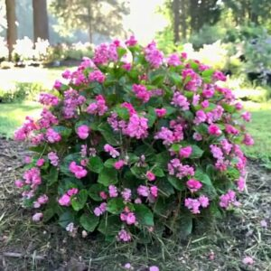 Jenny's Favorite New Annuals for Southern Gardens in 2021