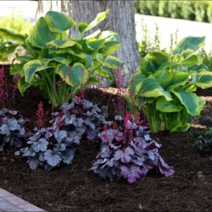Planting Shade Loving Perennials! 🌿💚// Garden Answer