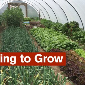 Learning to Grow - 6 Strategies