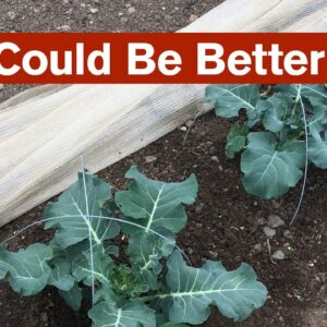 Less Could Be Better in the Extensive Garden