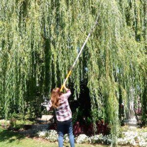 Flower Bed Refresh, Willow Pruning, & Still Planting Annuals! 🌿💚👏// Garden Answer