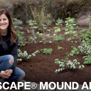 Low Scape Mound Aronia