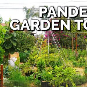 He Built This Garden from SCRATCH in a Year for ~$1000 🤯 | Touring My Assistant's Garden