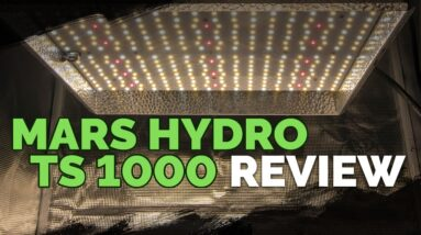 Mars Hydro TS 1000: A Surprisingly Good Grow Light For The $
