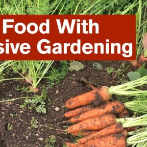More Food With Intensive Gardening