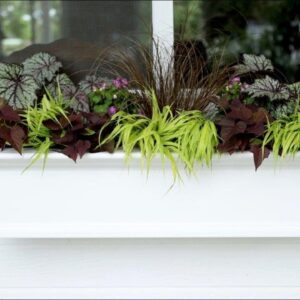 More Ideas for a Window Box in the Shade