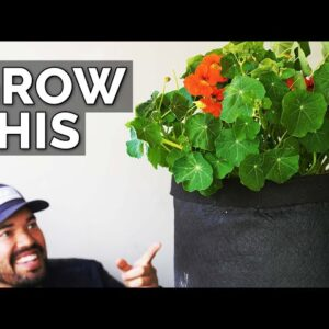 Nasturtiums: The Plant You're Not Growing (But Should Be)