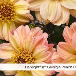 New Annuals from Proven Winners for 2016