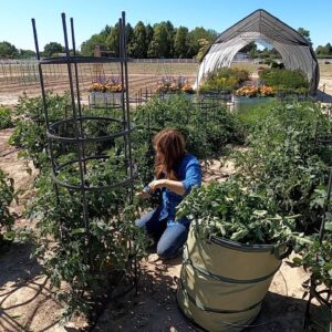 Pruning Tomatoes! �✂�🌿// Garden Answer