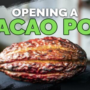 Opening And Tasting a RAW Cacao Pod! 🍫