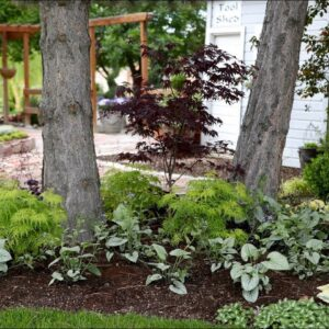 Beautiful Foliage Plants for Part Shade! 🌿⛅��// Garden Answer