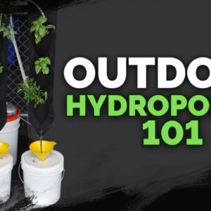Outdoor Hydroponics Basics: Avoid These Mistakes
