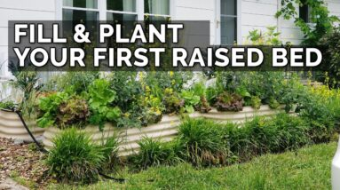 How to Fill, Fertilize, Plant, AND Mulch a Raised Bed from START to FINISH