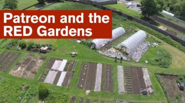 Patreon and the RED Gardens