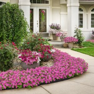 Order Supertunia® Vistas from Proven Winners® for Your Containers or Landscaping