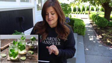 Plant A Cocktail Garden!