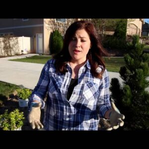 Plant A Perfect Corner Garden in Your Landscape
