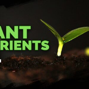 Plant Nutrition 101: All Plant Nutrients and Deficiencies Explained