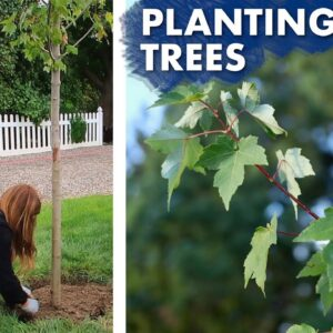 Planting a Hedge of Maple Trees 🌳// Garden Answer
