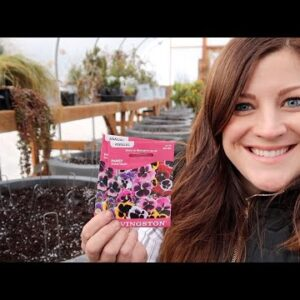 Planting Pansy Seeds! 🌿// Garden Answer