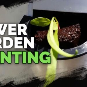 Planting the Tower Garden