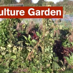 Polyculture Garden Introduction