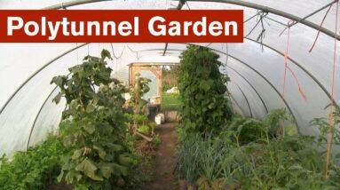 Polytunnel Garden Introduction