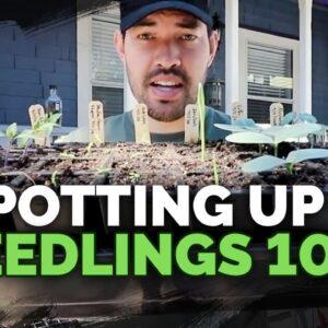 Potting Up Seedlings 101: Easy Seed Starting Tip!