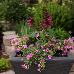 Pretty In Pink Container