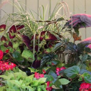 Proven Beauty: How To Trim An Upright Container