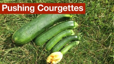 Pushing Courgettes