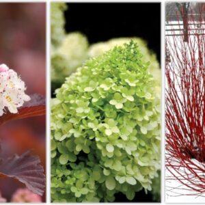 Landscape Makeover Part 3: Three Shrubs for All Year Interest! 🌿🙌💚// Garden Answer