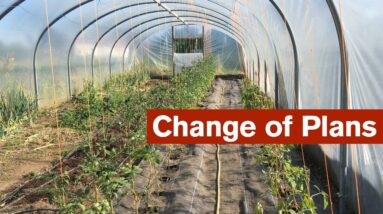Radical Change of Plans for a Polytunnel