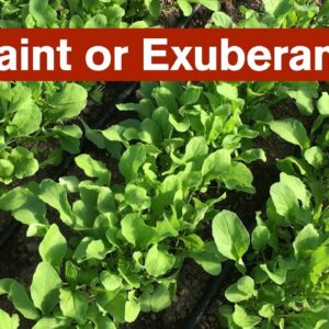 Restraint or Exuberance - Deciding What to Grow