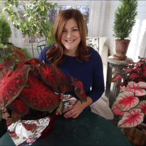 Caladiums: the New Christmas Plant!? 😍🎄❤️// Garden Answer