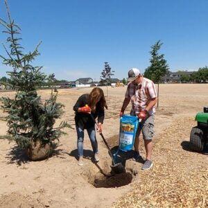 Planting a Spruce Tree & Finishing up Planting Projects Around Town! 💚💜💙 // Garden Answer