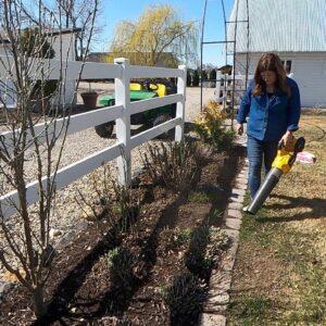 Pruning My Coralberry & Flower Bed Maintenance! ✂�💚 // Garden Answer