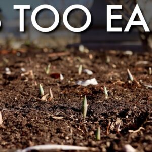 What to do if Your Bulbs Come Up Too Early 😳🌷👍// Garden Answer