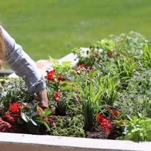 Planting Containers For Sun and Shade! 💚🌿👍// Garden Answer